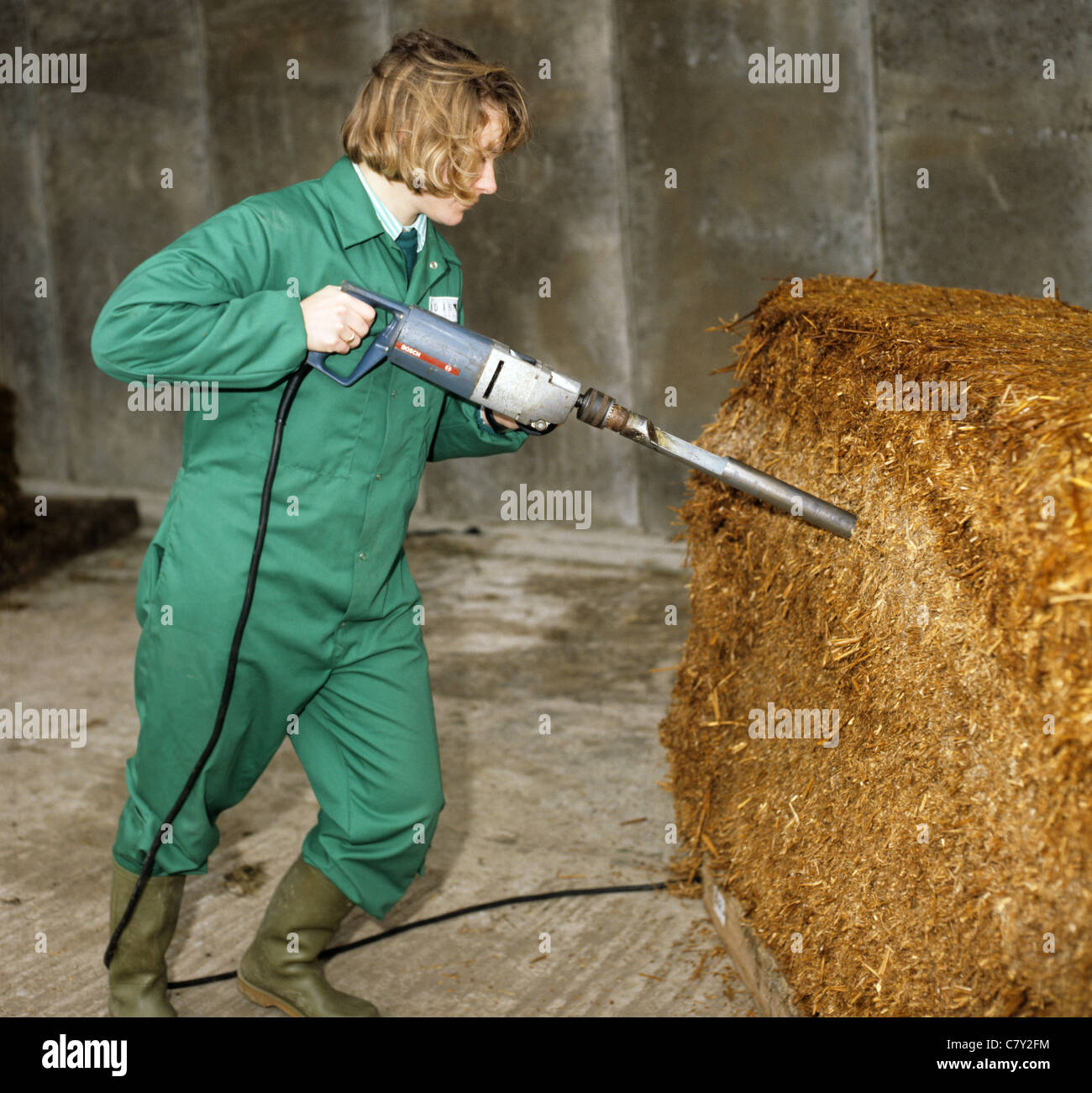 Woman researcher taking a core sample from a whole wheat crop silage block for testing - Stock Image