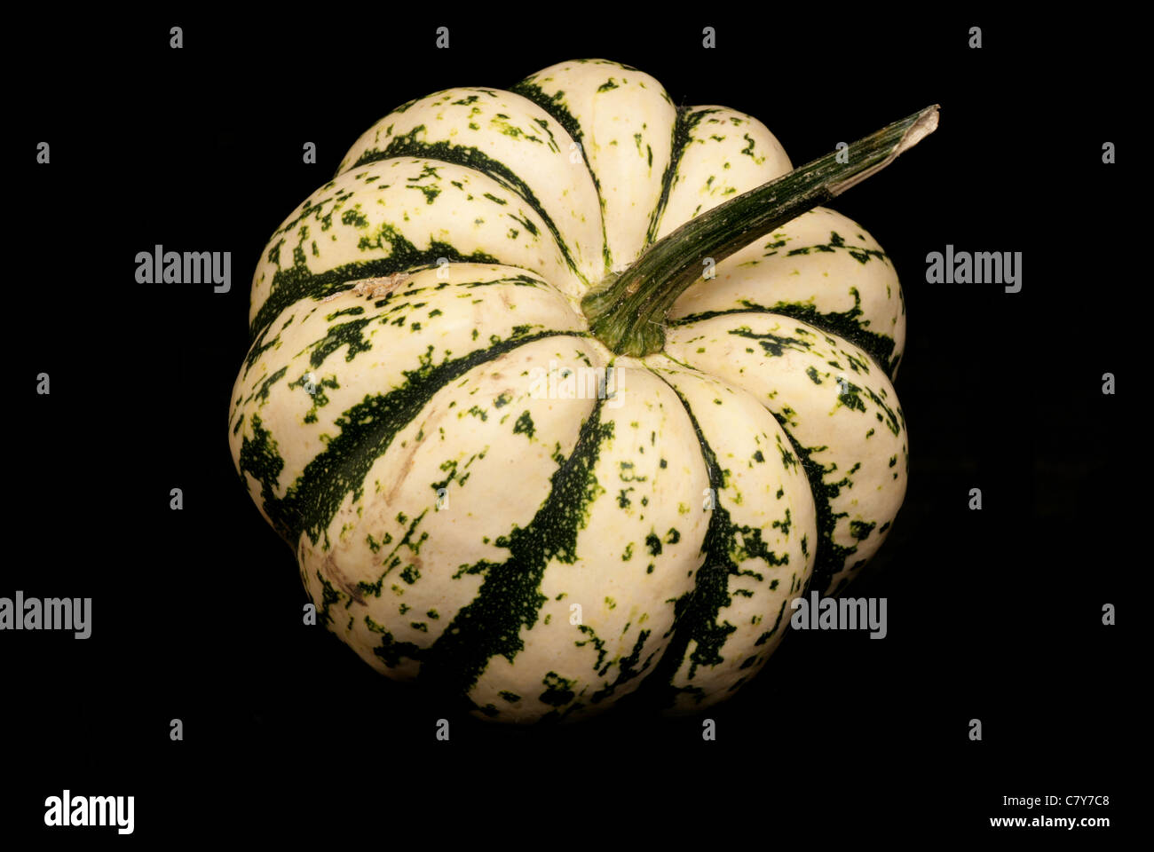 Harlequin Squash on a black background - Stock Image