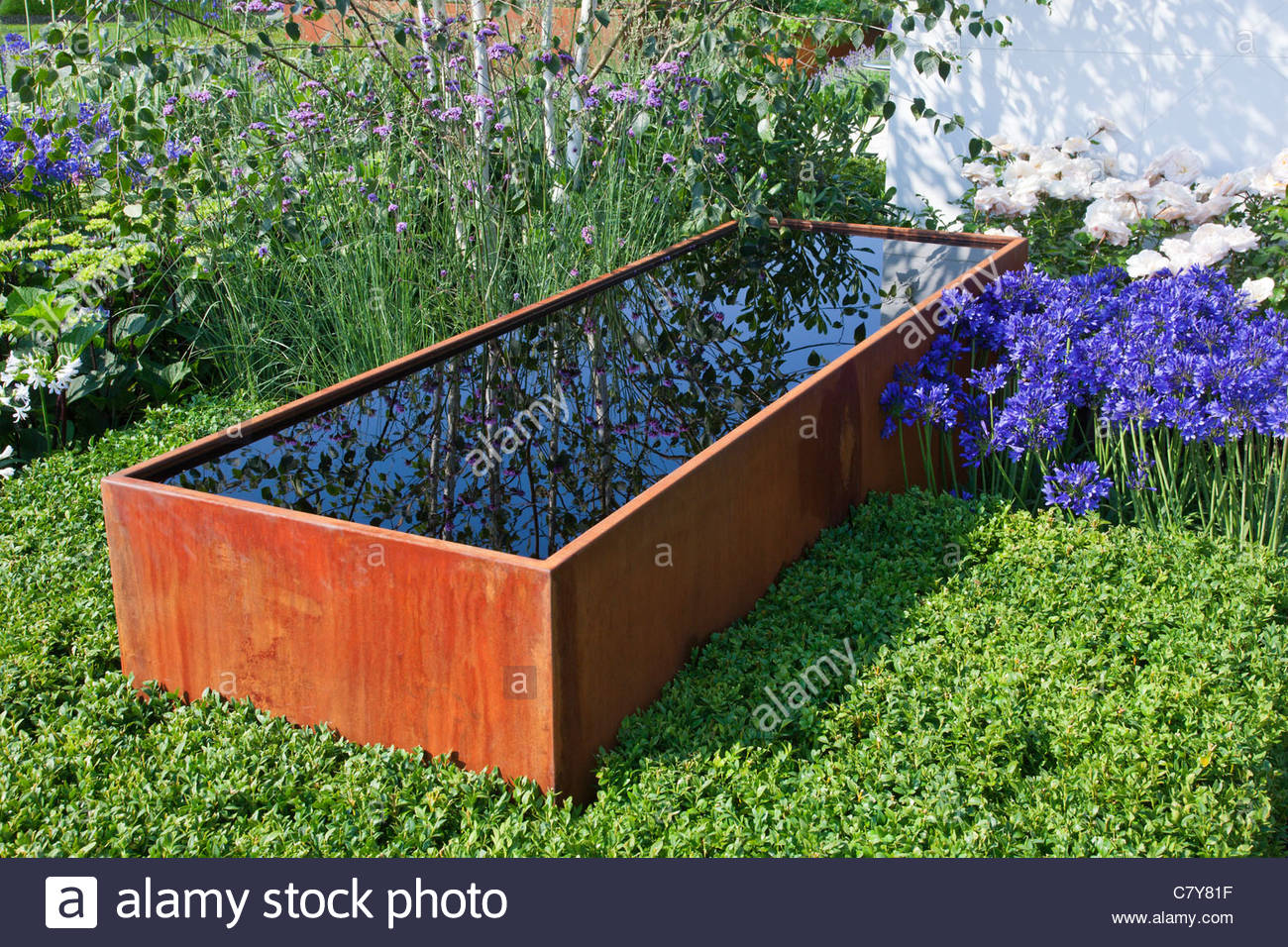 Contemporary Garden Design With Rusted Corten Steel Water Trough Surrounded  By Buxus Box Hedge, Verbena Bonariensis, Agapanthus