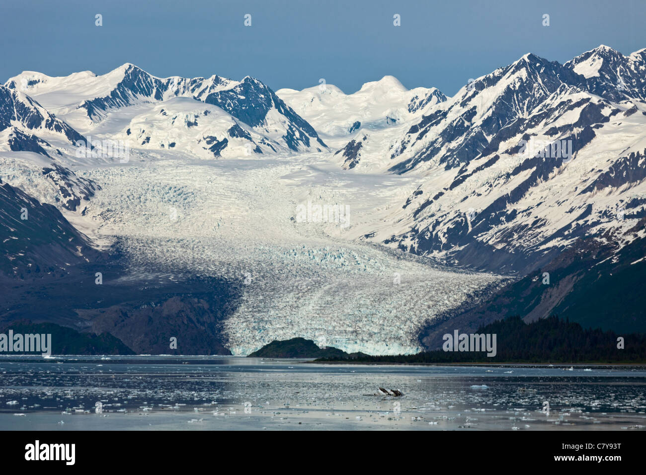 Distant view of Yale Glacier in College Fjord, Alaska - Stock Image
