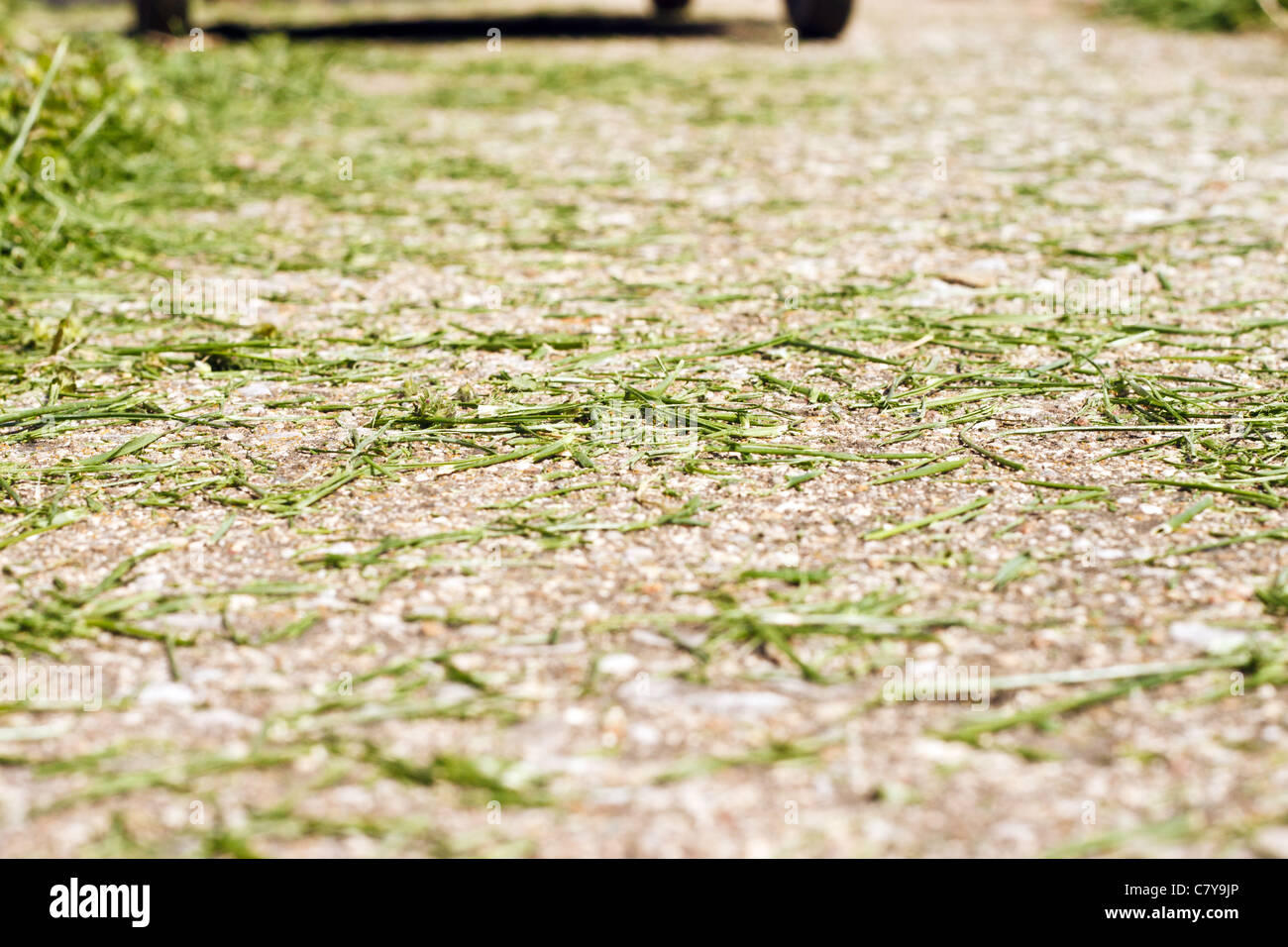 Grass clippings left on sidewalk after recent mow - Stock Image