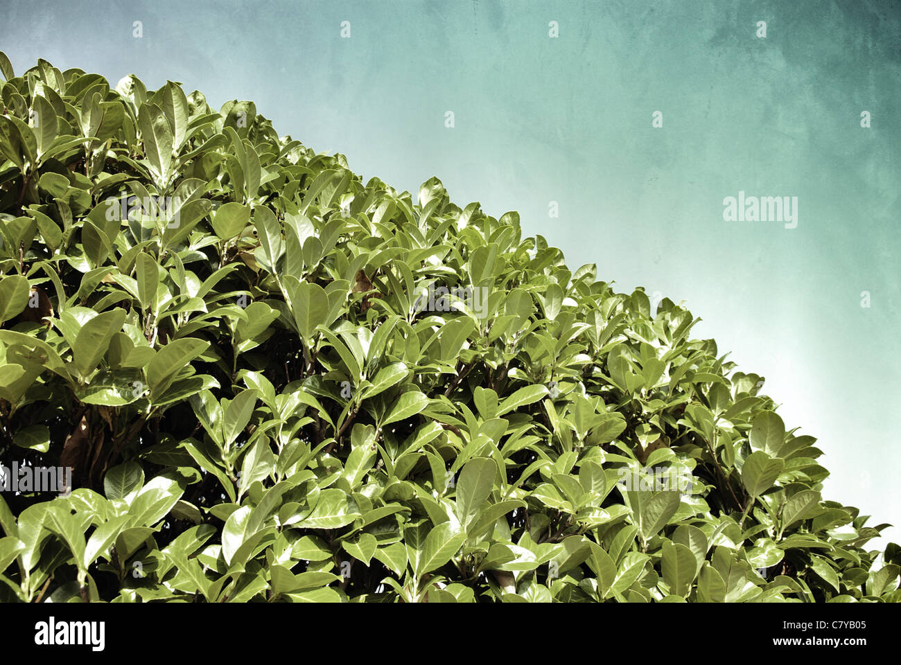 LEAVES OF A BUSH - Stock Image