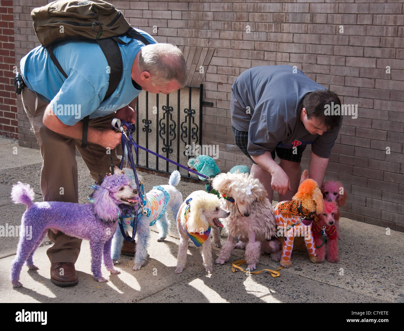 Two men and their poodles that have been dyed rainbow colors for the Gay Outfest event in Philadelphia, Pennsylvania - Stock Image