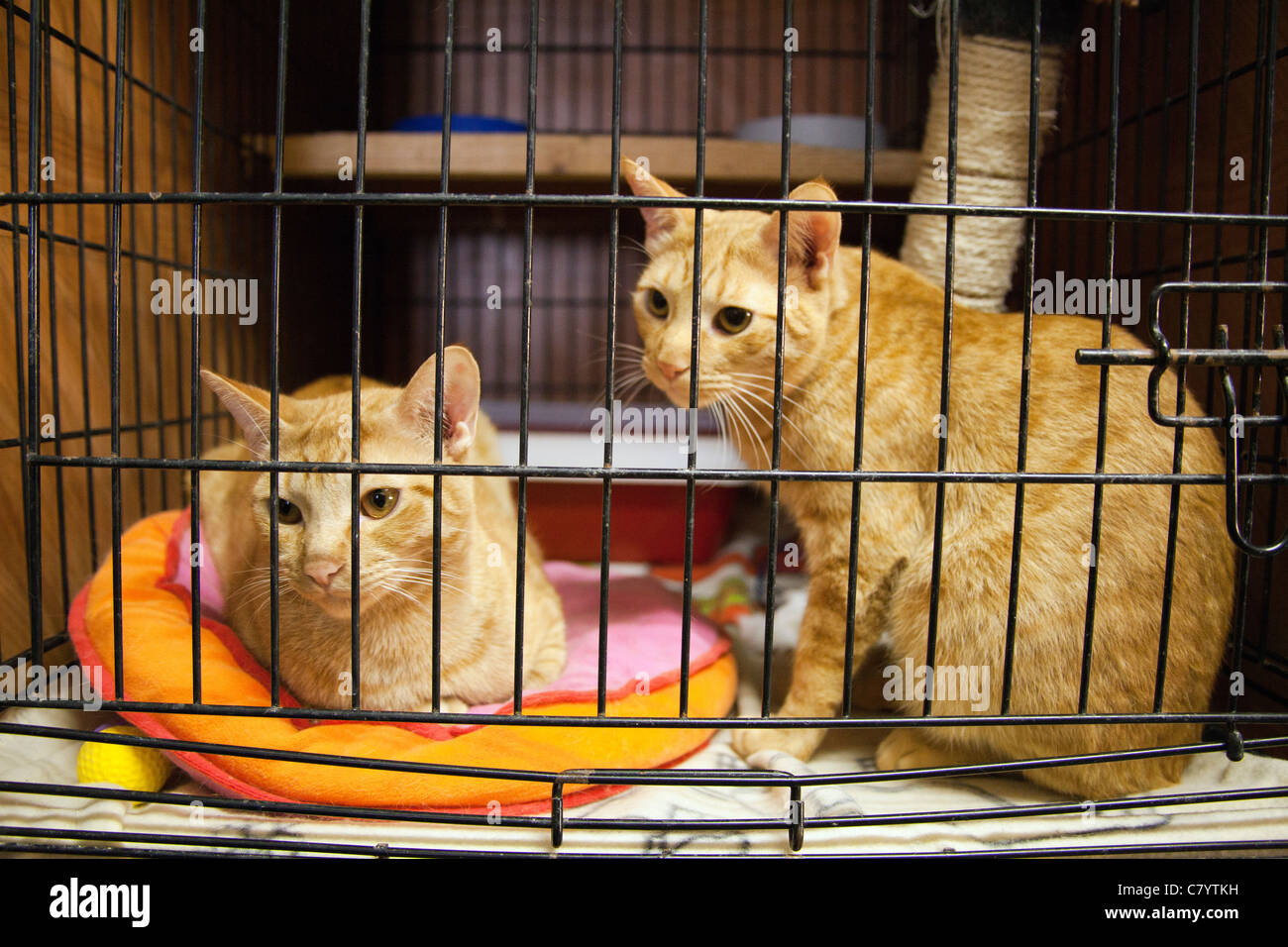 Cats in animal shelter - Stock Image