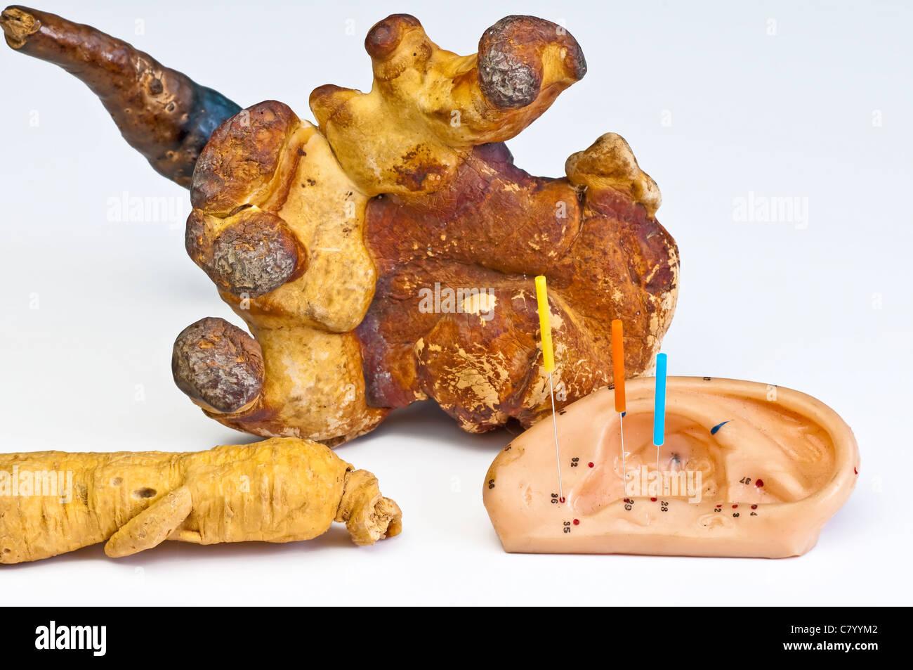 how to grow lingzhi mushroom