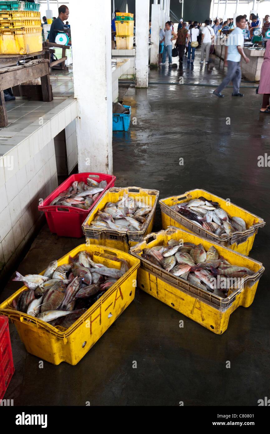 Fish market, Kota Kinabalu, Sabah, Malaysian Borneo - Stock Image