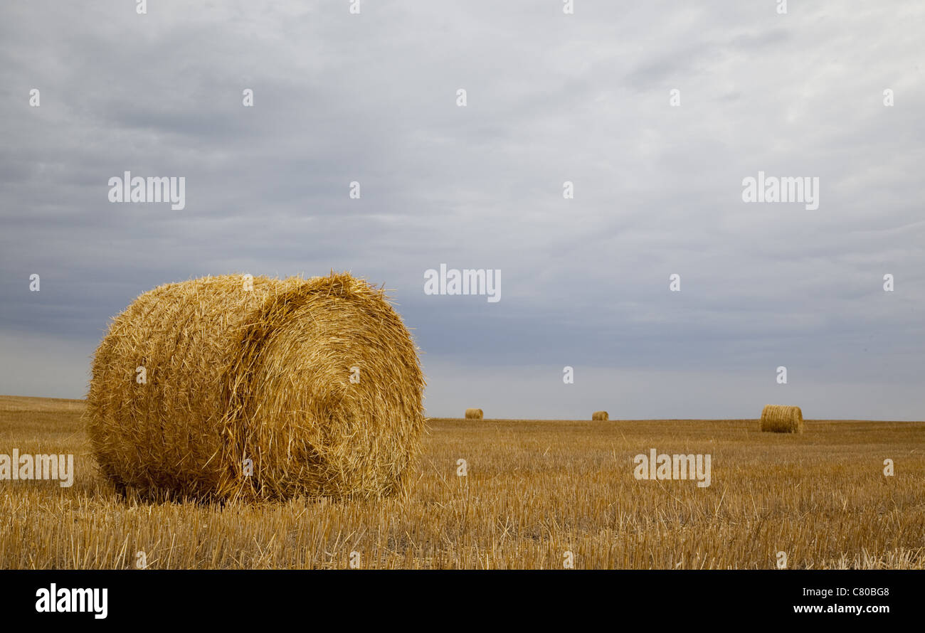 Colour Photograph of Golden Hay Bails against a dreary sky on a Prairie Field in Rural Saskatchewan. - Stock Image