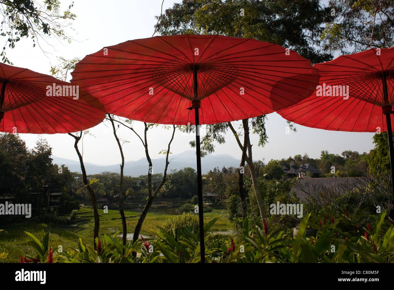 Thailand, Chiang Mai, Parasol - Stock Image