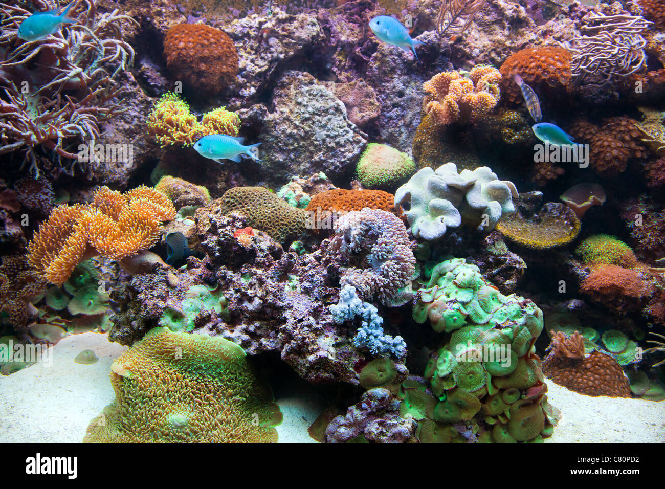 Underwater view in aquarium - with fish and coral reef - Stock Image