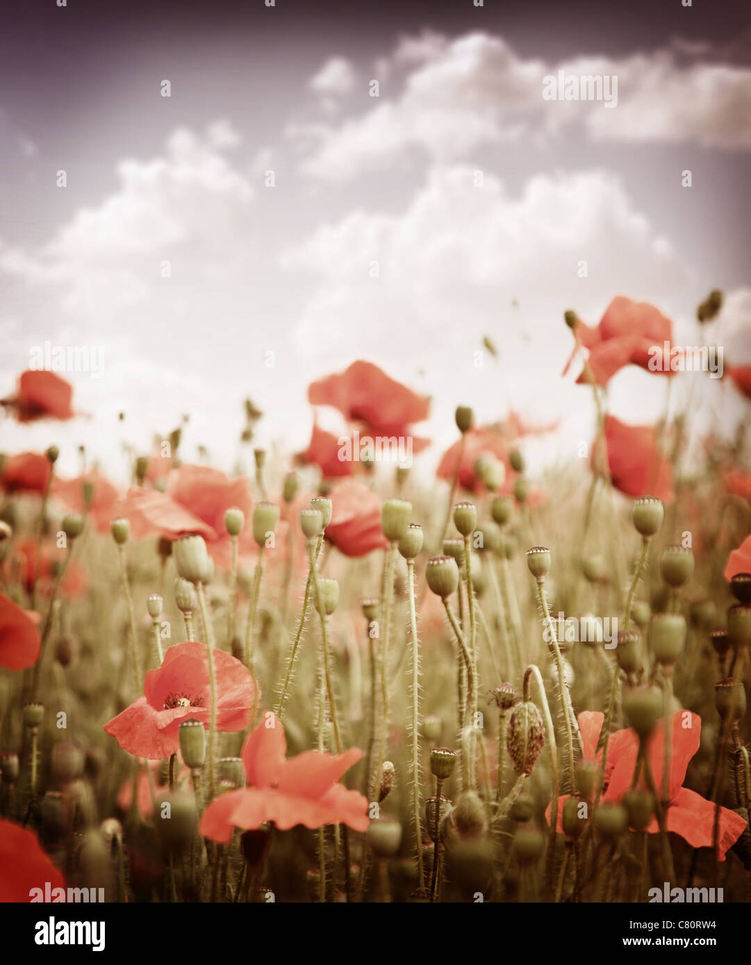 Stylized old slide. The field of poppies in the sky. - Stock Image
