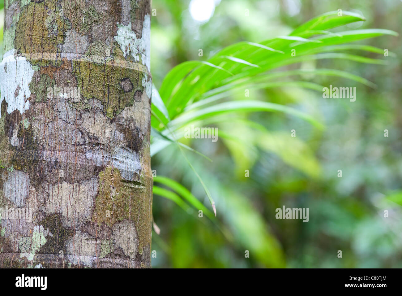 detail tropical rain forest green background - Stock Image