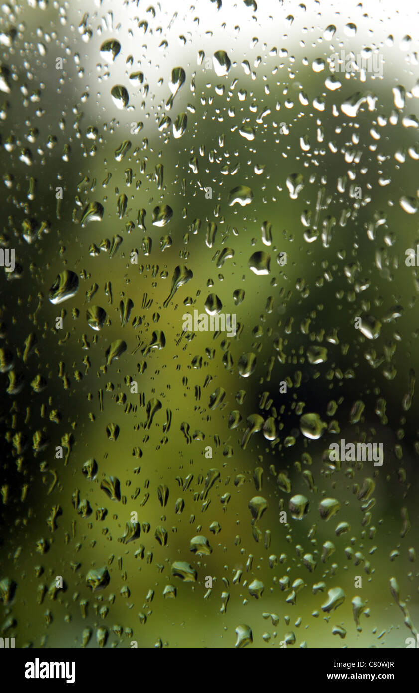 A garden seen through a window pane with rain on the glass - Stock Image