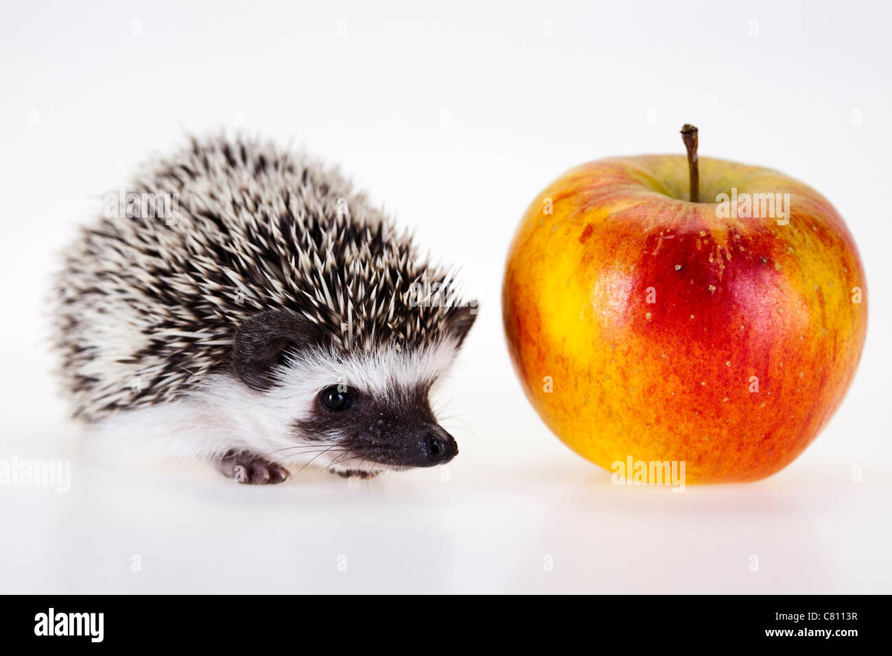 Hedgehog with apple - Stock Image