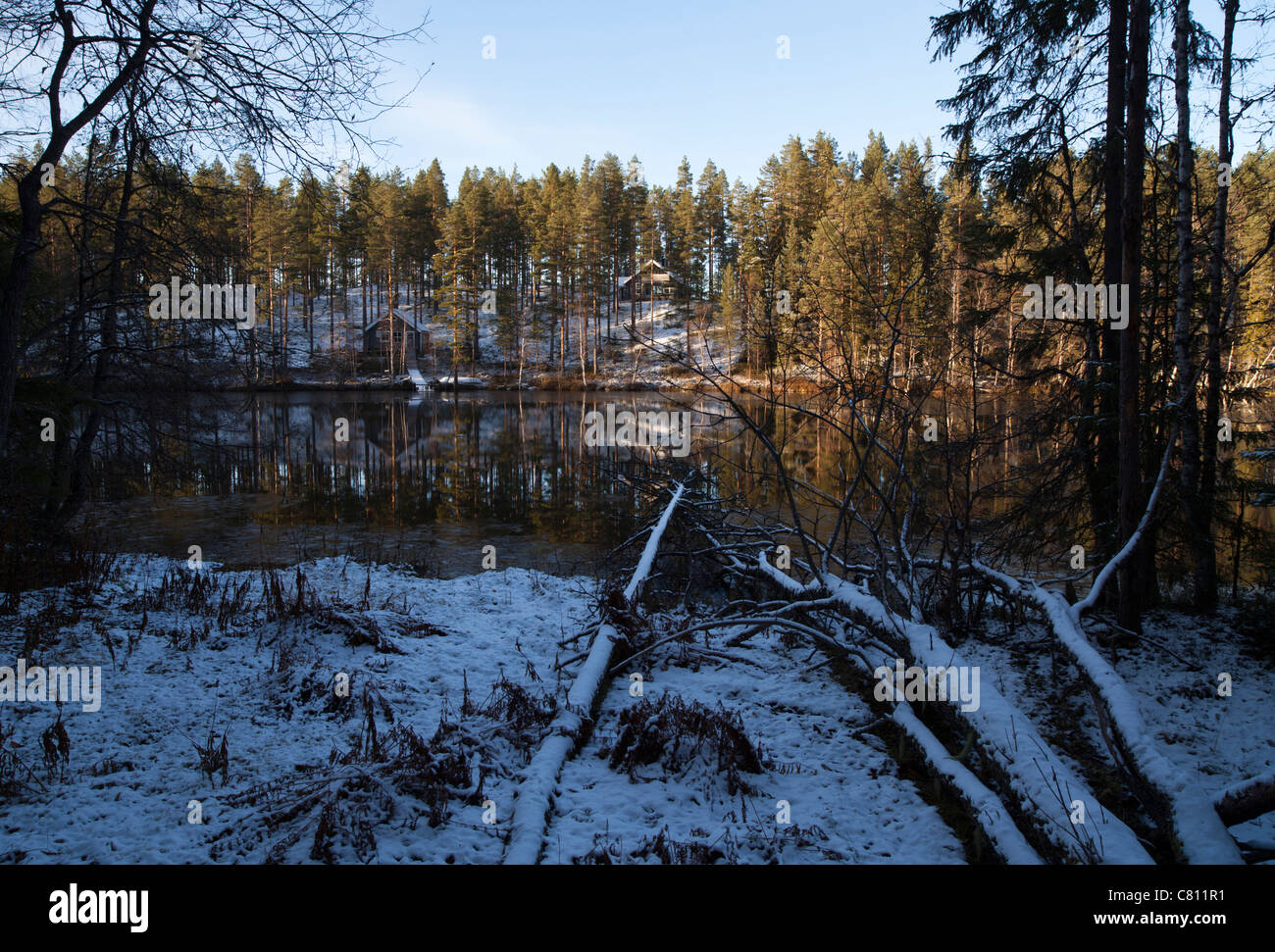 Forest lake freezing over at Autumn , Finland - Stock Image