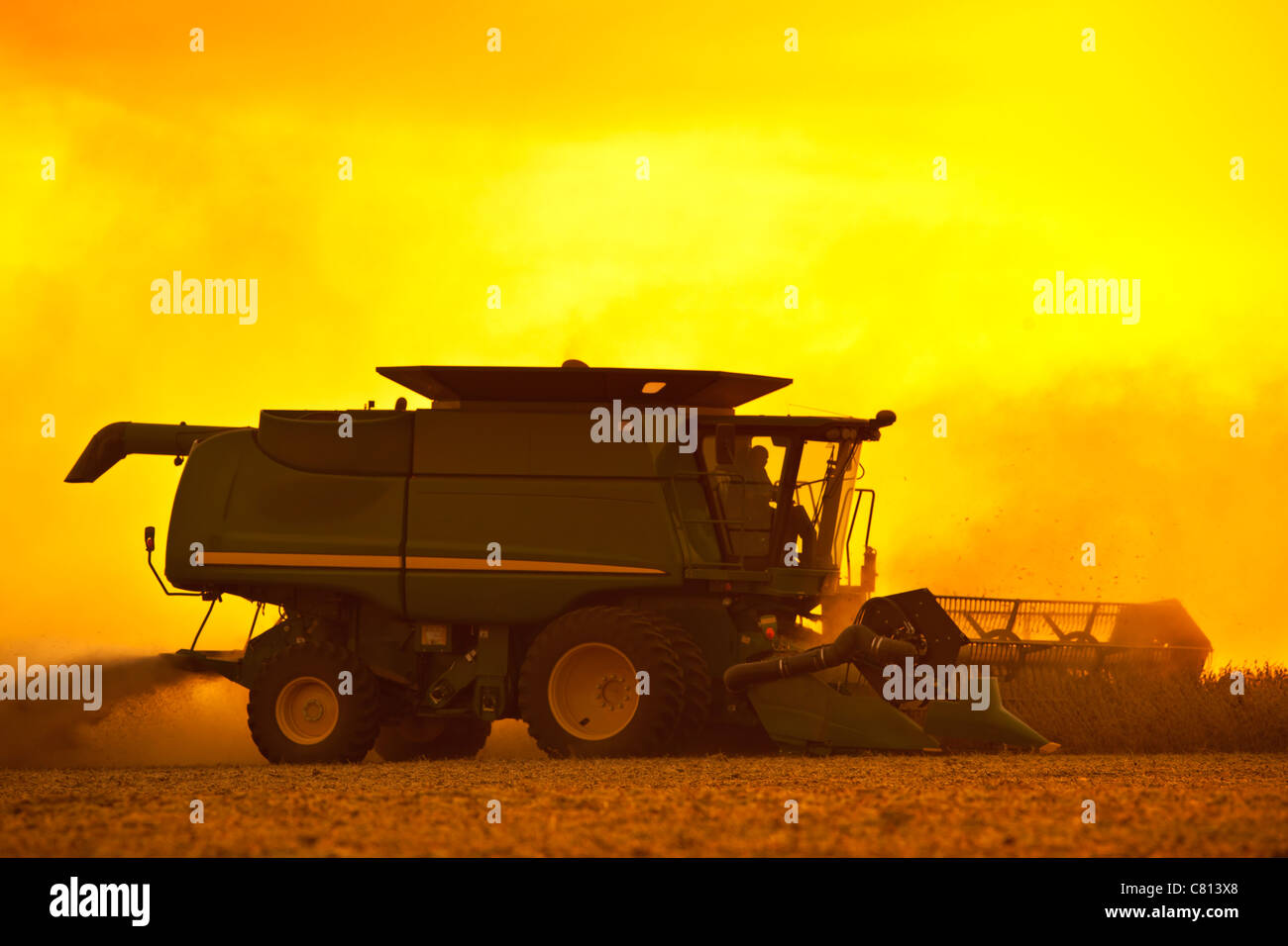 Combine Harvesting soybeans - Stock Image