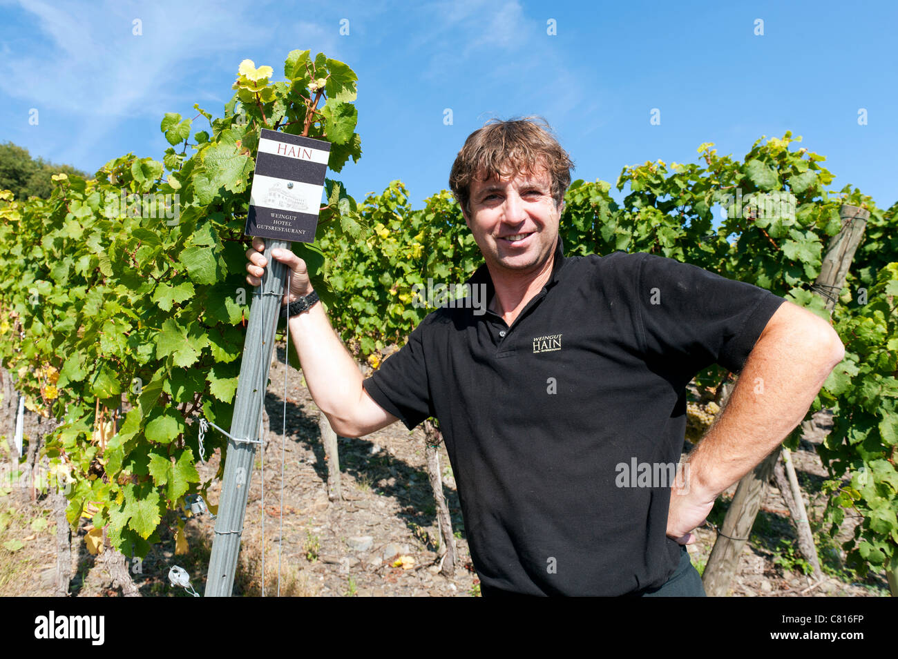 Herr Hain the winemaker in his vineyard at Piesport in Mosel valley wine region of Germany - Stock Image
