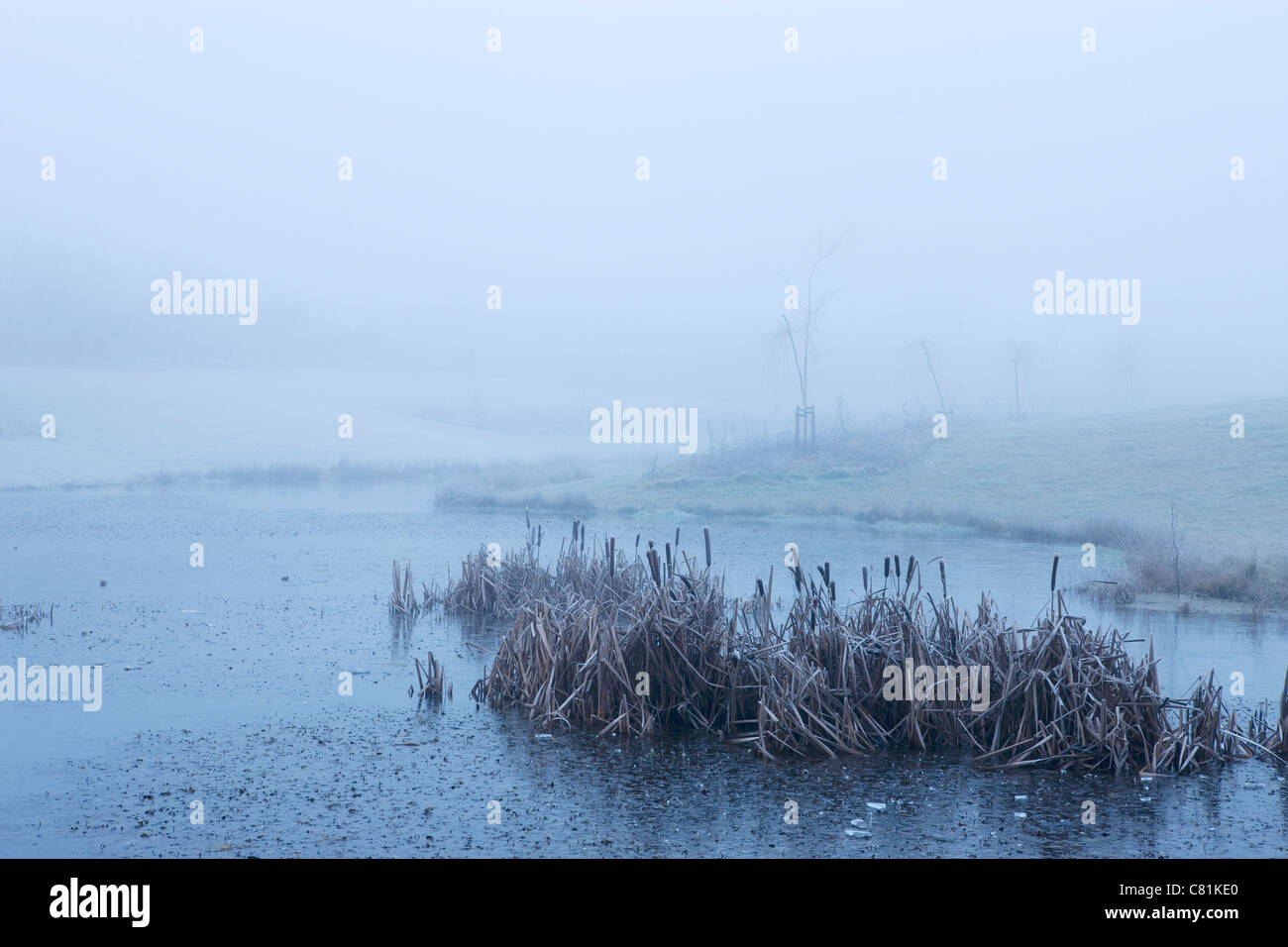 Morning stillness on winter morning in Denmark - Stock Image