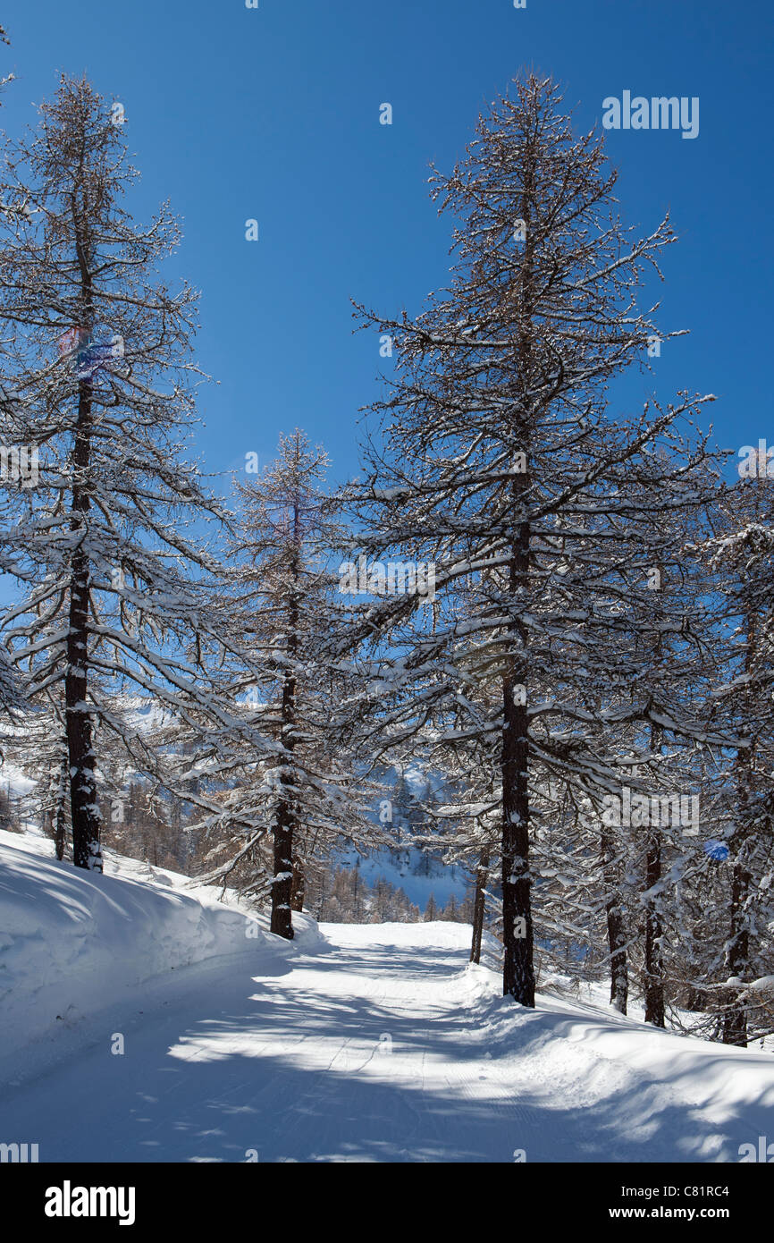 Beginners piste on the Via Lattea, Sauze d'Oulx, Piemonte, Italy - Stock Image