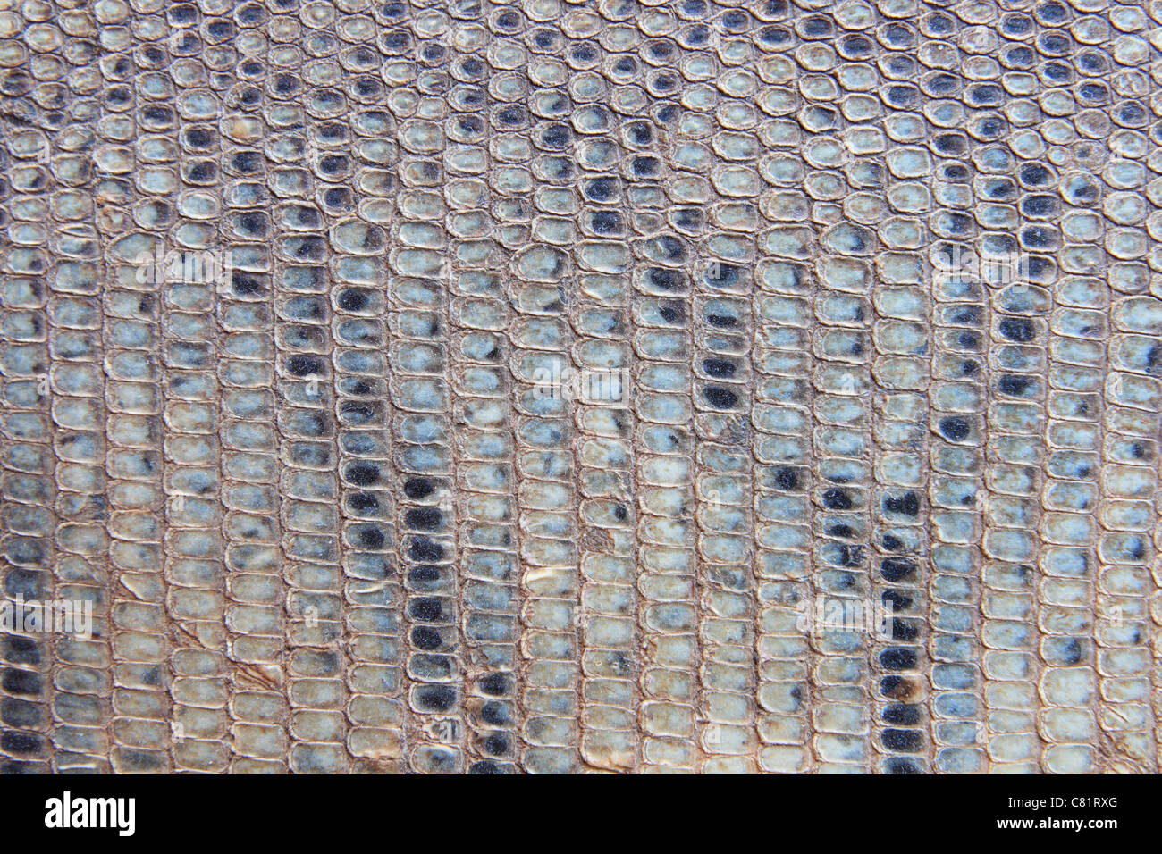 old scaly snakeskin background from an african drum head - Stock Image