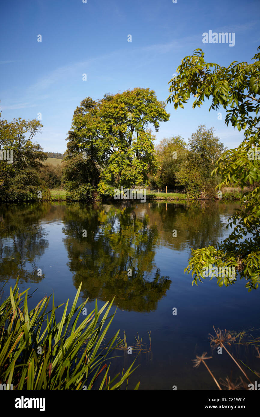 A tree and its reflection in the water of the River Thames, near to Pangbourne, reading, Berkshire. - Stock Image