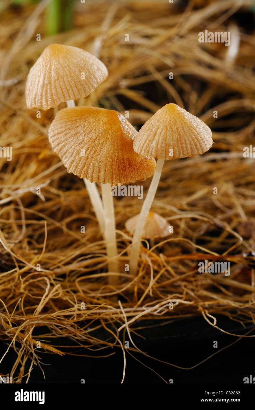 Fungal growth in pot - Stock Image