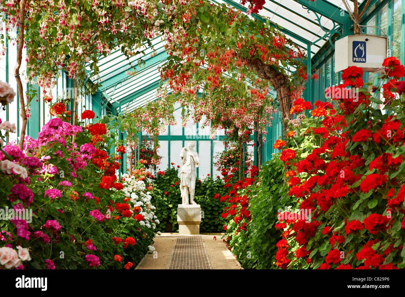 long glass gallery in bloom, Royal Greenhouses of Laeken, Royal Castle of Laeken, Brussels, Belgium, Europe - Stock Image