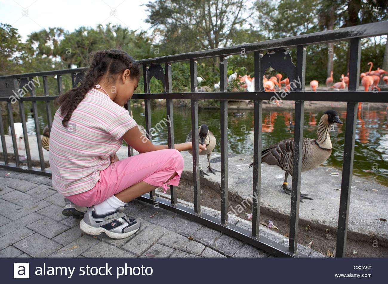 Girl at zoo looking at goose - Stock Image