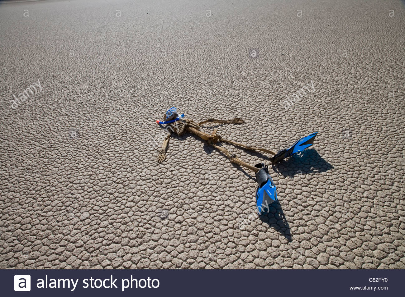 Skeleton with flippers on cracked earth,USA, California, Death Valley - Stock Image