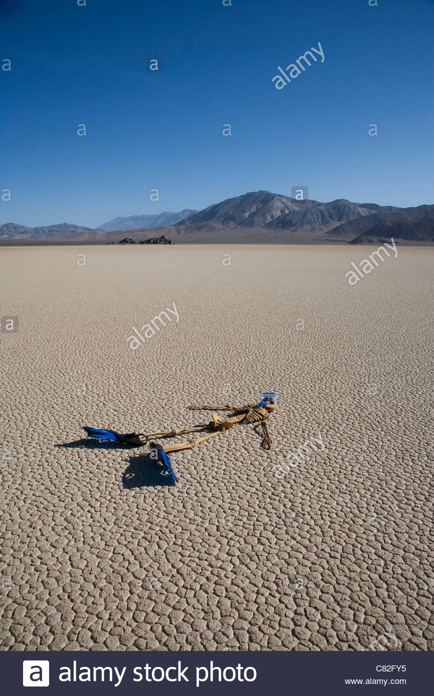 USA, California, Death Valley, skeleton with flippers on cracked - Stock Image