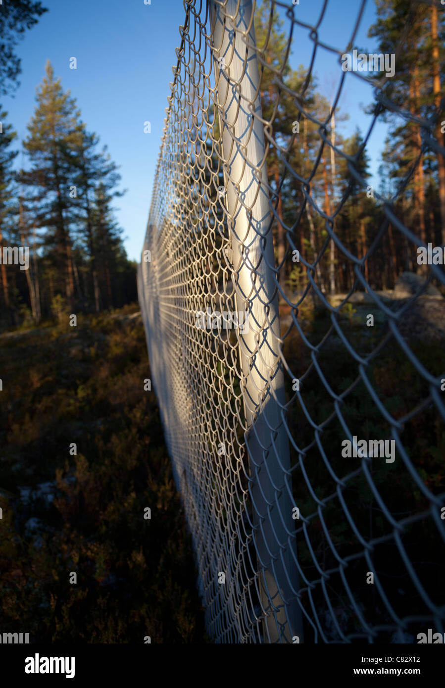 Closeup of a metal wire netting fence in the middle of the forest - Stock Image