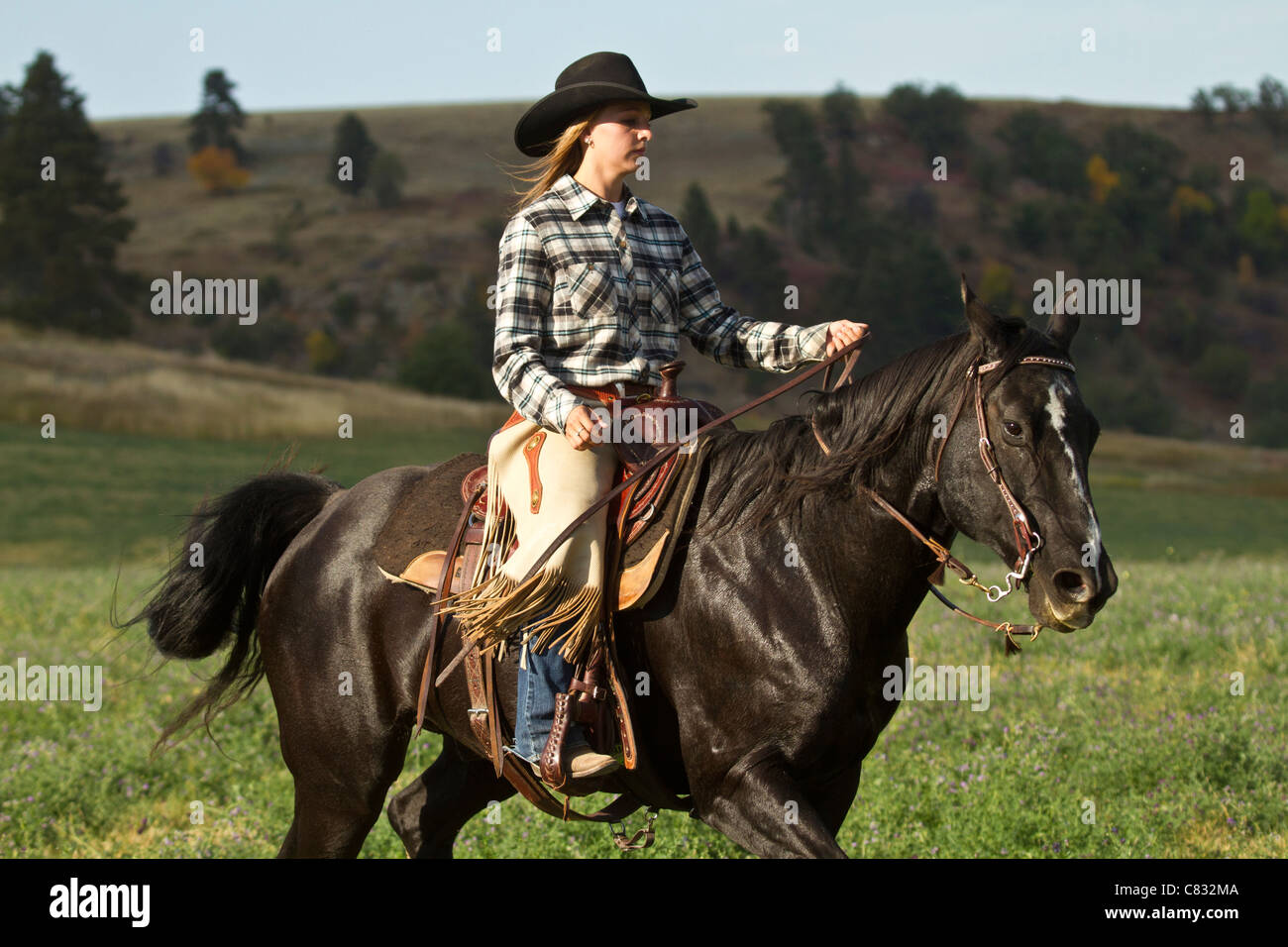 Cowgirl On A Black Horse Riding By Stock Photo Alamy