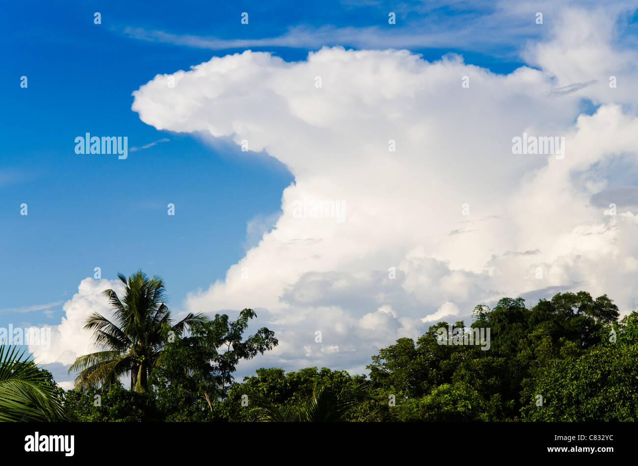 Threatening anvil shaped cumulonimbus cloud surrounded by blue sky forms above coconut palm trees in sunshine in - Stock Image
