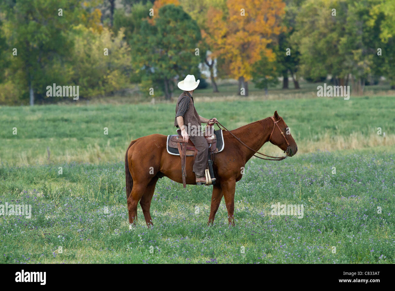 Cowboy on a brown horse looking off into the distance - Stock Image