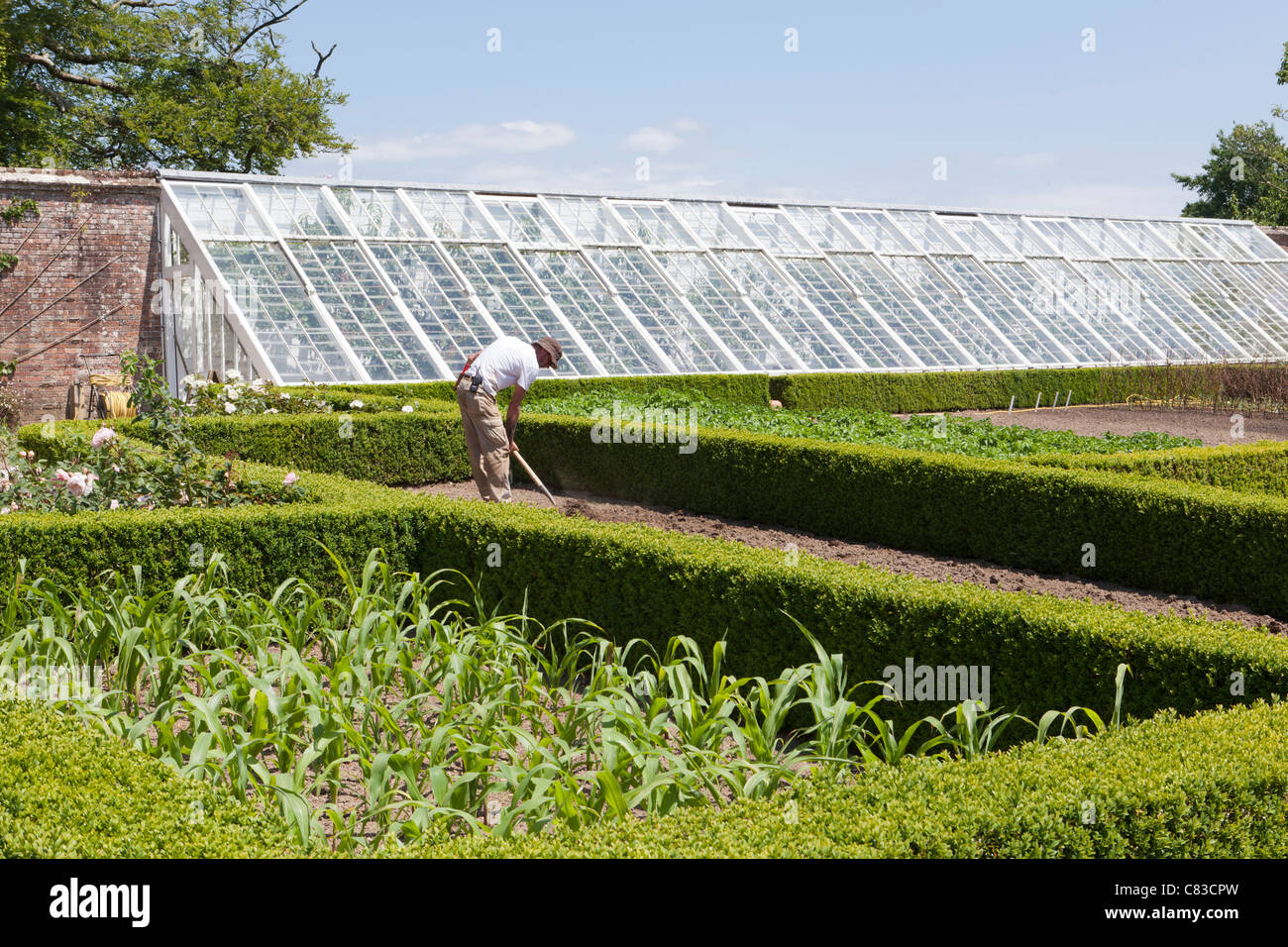 The kitchen garden and one of the restored greenhouses at The Lost Gardens of Heligan, Pentewan, St.Austell, Cornwall - Stock Image