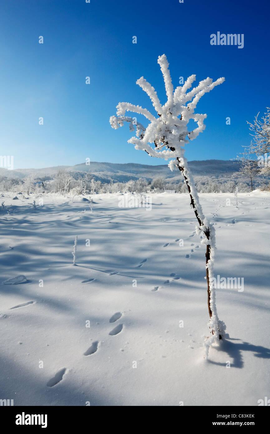 Winter flower Stock Photo