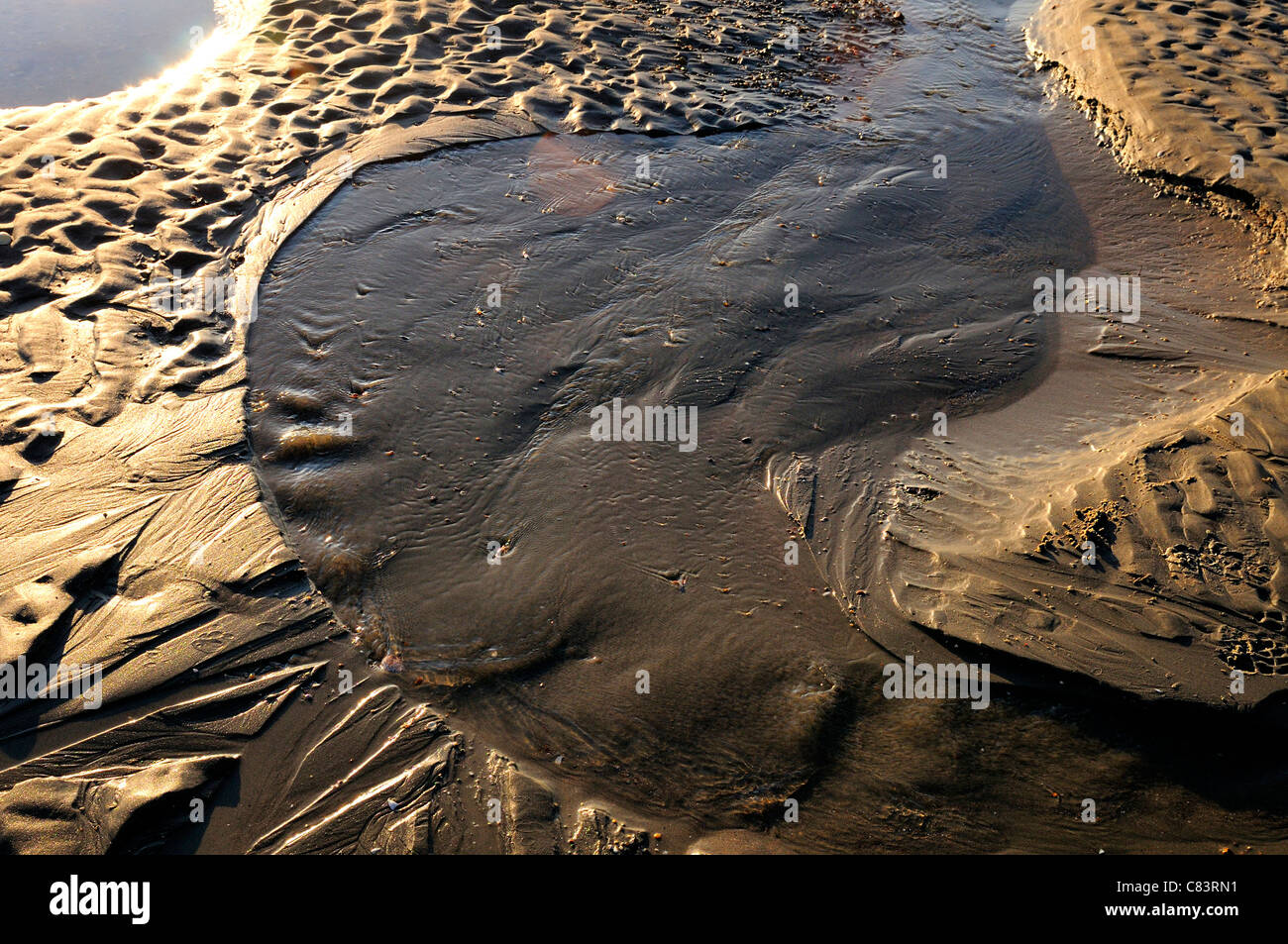 Patterns  in the sand from the water  low tide at West Wittering Beach, - Stock Image