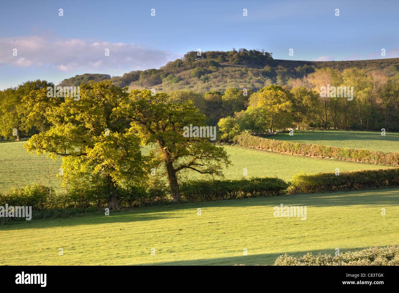 View of Chanctonbury Ring, West Sussex - Stock Image
