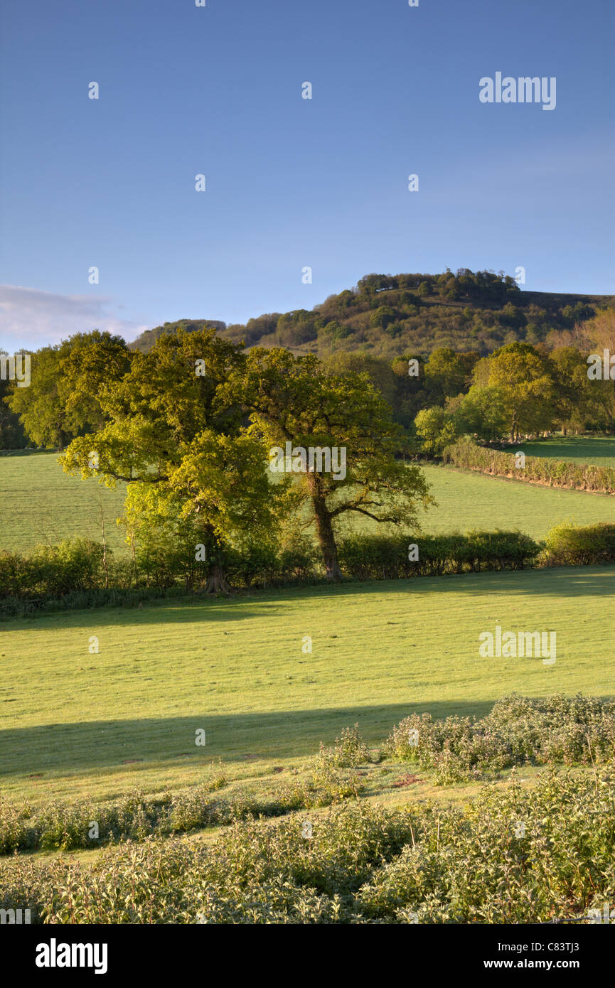 View of Chanctonbury Ring, West Sussex Stock Photo
