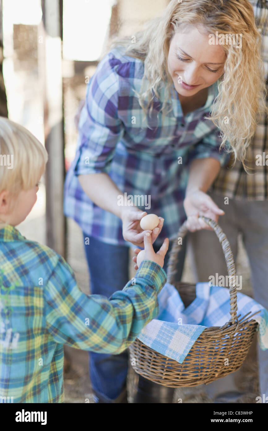 Mother and son fetching eggs from hens - Stock Image