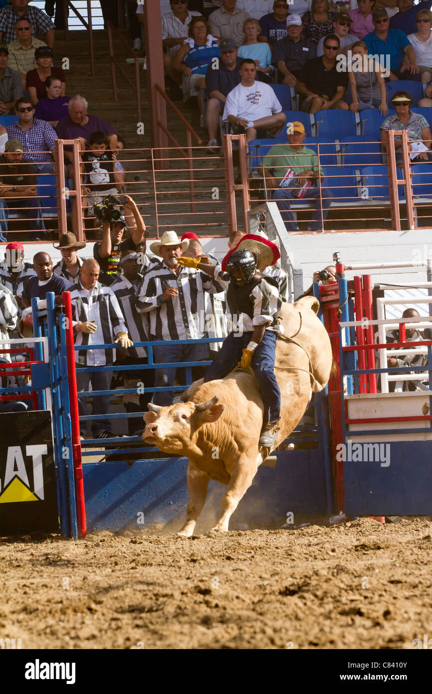 Bull Riding at the Angola State Prison Rodeo in Louisiana State Penitentiary - Stock Image