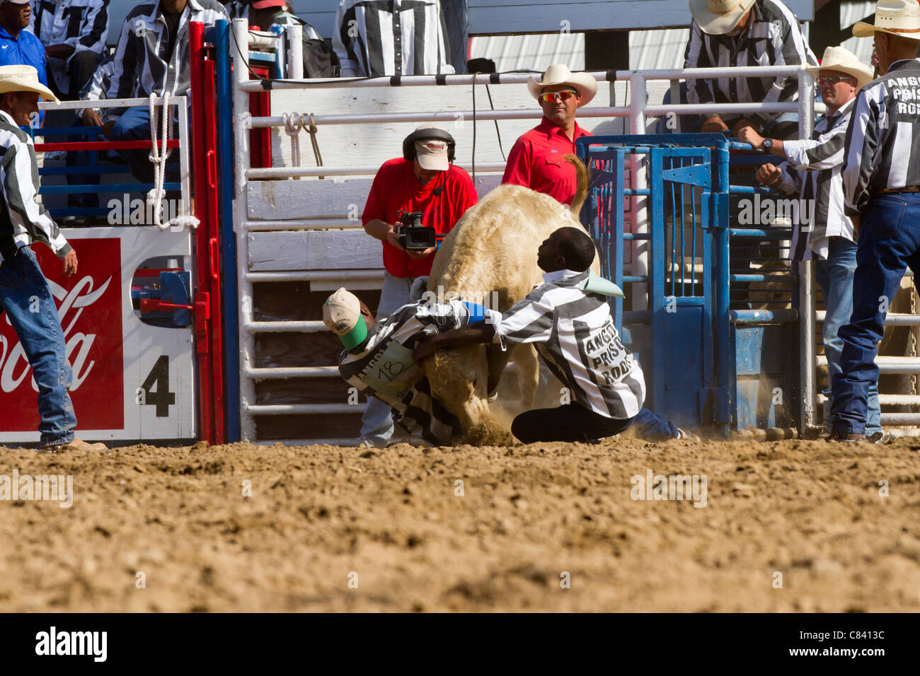 Angola Bulldogging at the Angola State Prison Rodeo in Louisiana State Penitentiary - Stock Image