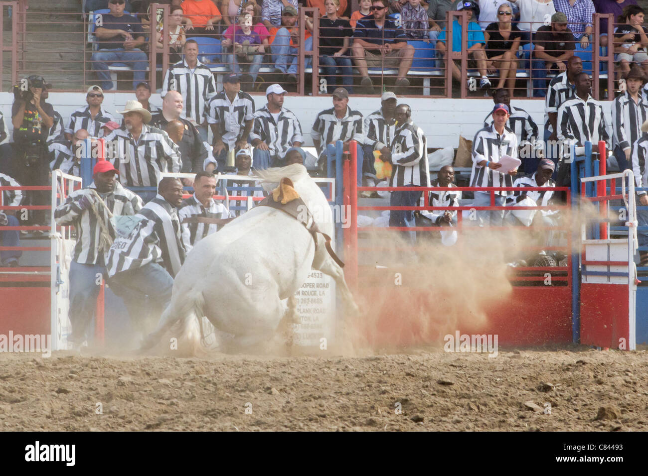 Wild Horse Race at the Angola State Prison Rodeo in Louisiana State Penitentiary - Stock Image