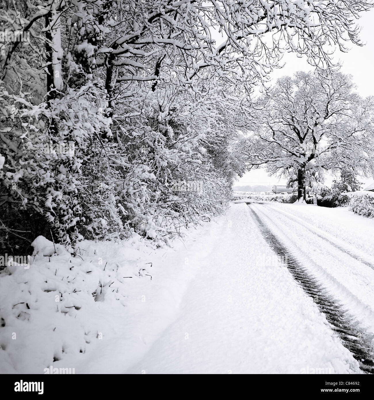 Snow covered trees lining road - Stock Image