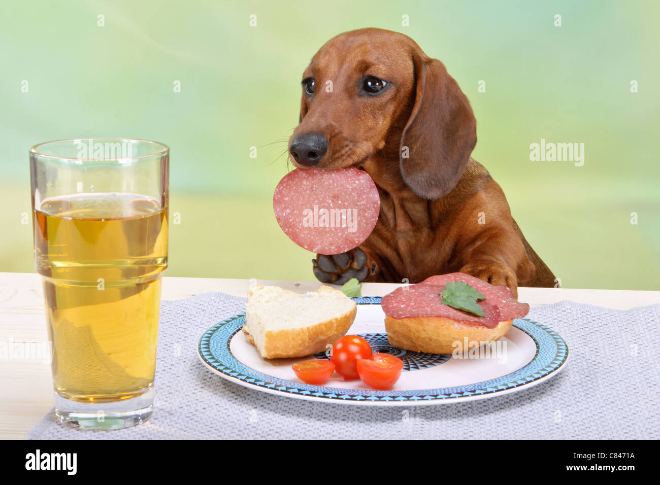 Dog Eating Food At The Table