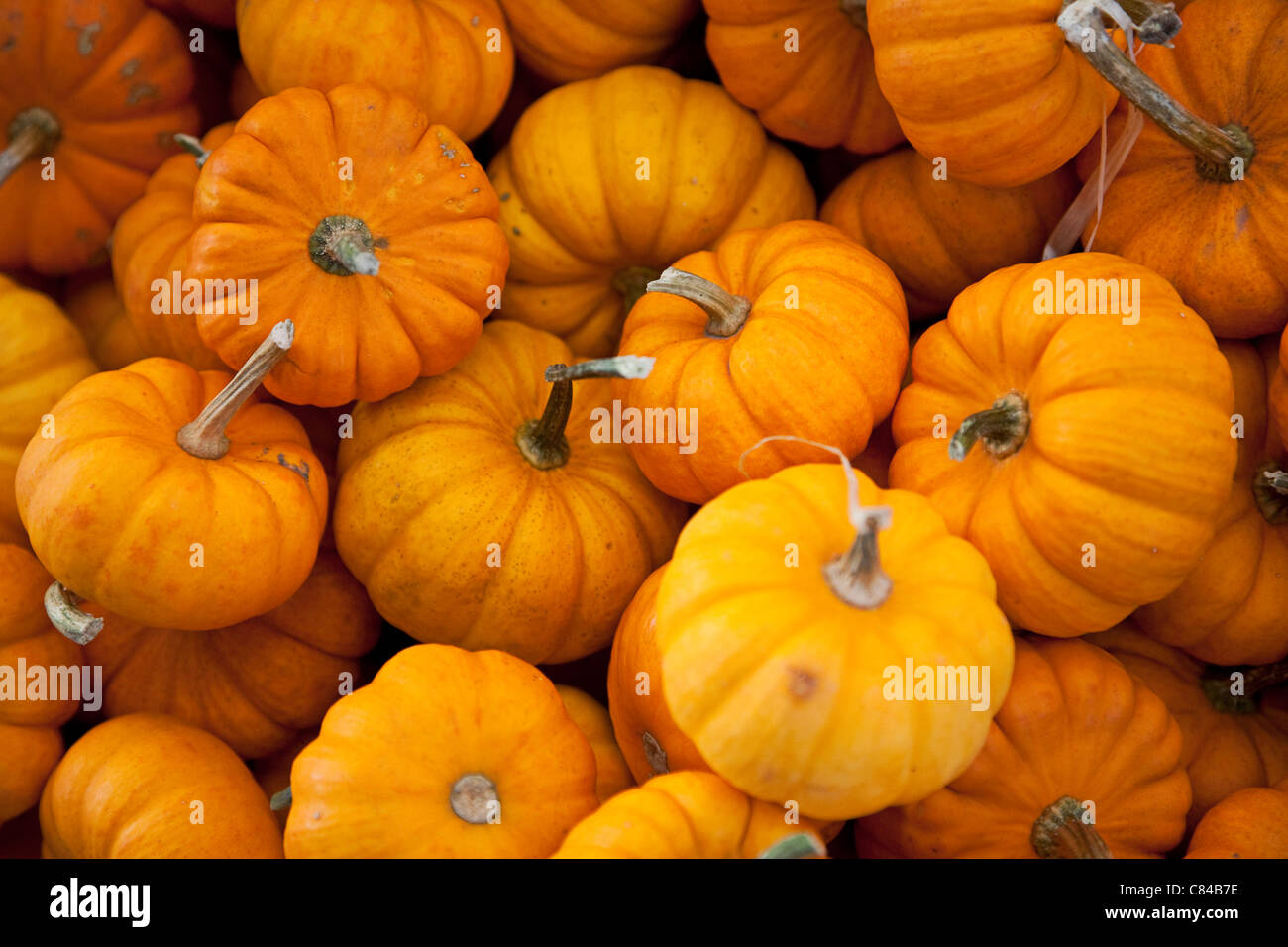 Small pumpkins ready for Halloween - Stock Image