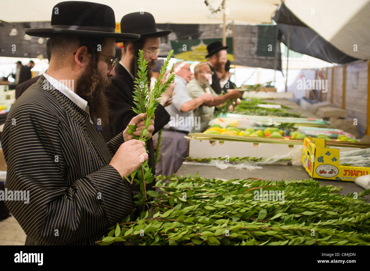 Religious Jews inspect and purchase 'the four species',  as ordered in Leviticus 23:40, just before the - Stock Image