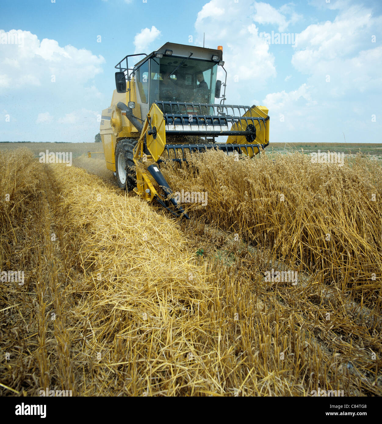 Trial plot harvester combining experimental oats trials plots on research station, Hampshire - Stock Image