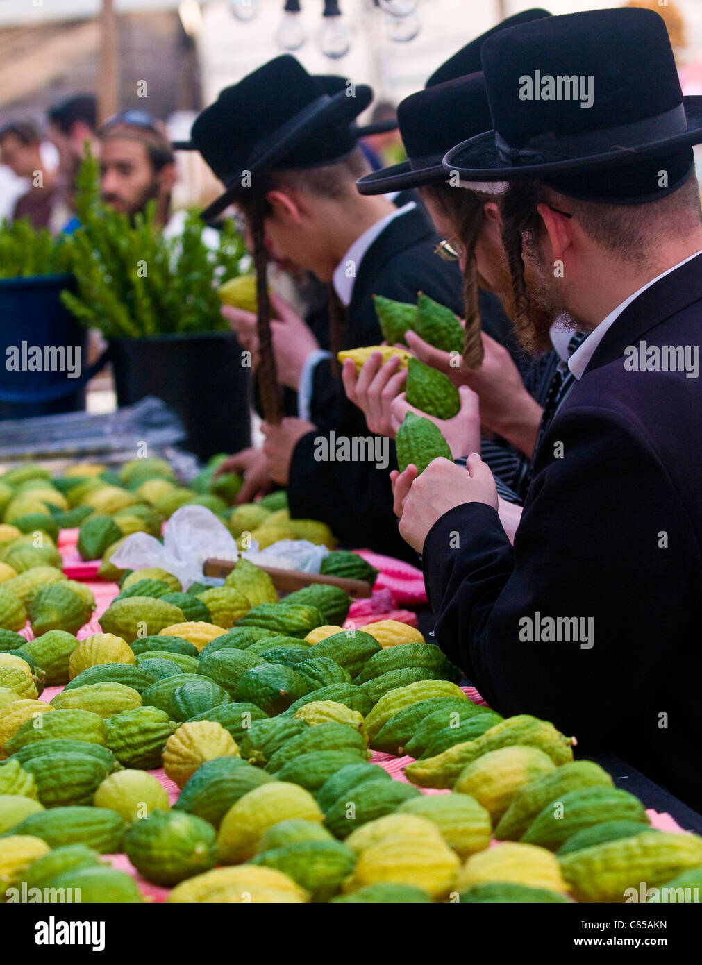 An ultra-orthodox Jewish men inspects an 'Etrog' in the 'Four species' market in Jerusalem Israel - Stock Image