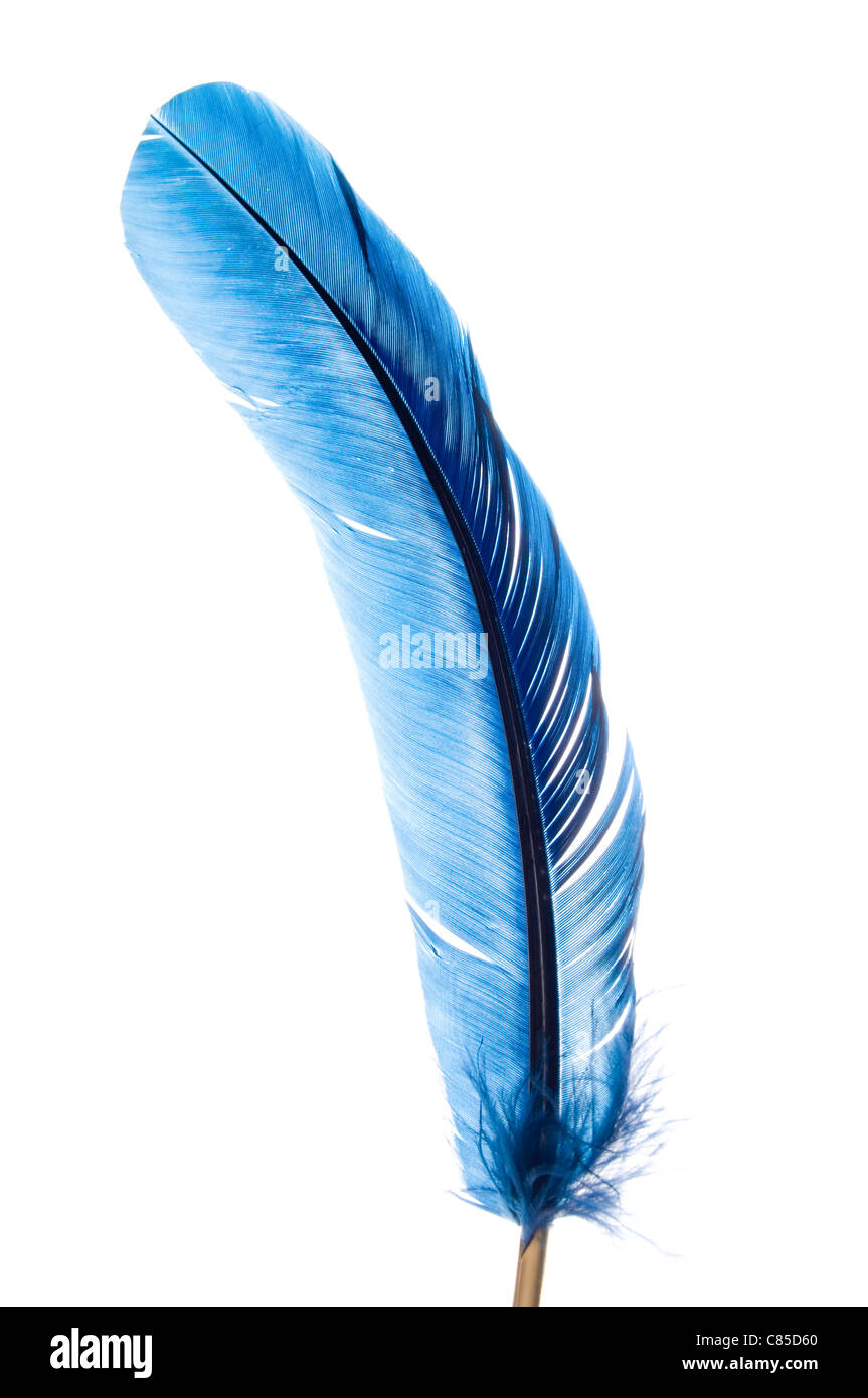 3cfc54a8a9e9f quill pen from a blue feather Stock Photo: 39458104 - Alamy