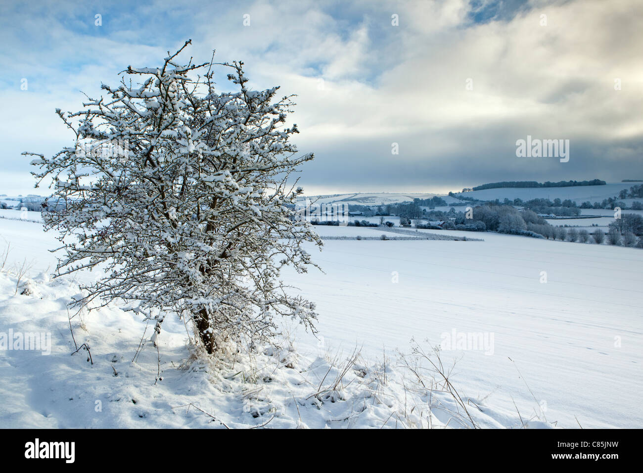 A winter view with a snow covered hawthorn tree and clearing snow clouds above Knighton Hill, Broad Chalke Wiltshire - Stock Image